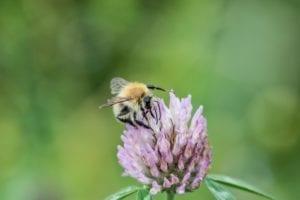 Hof Eggers Biohof Hamburg - Konzept - Bio aus Überzeugung - Biene