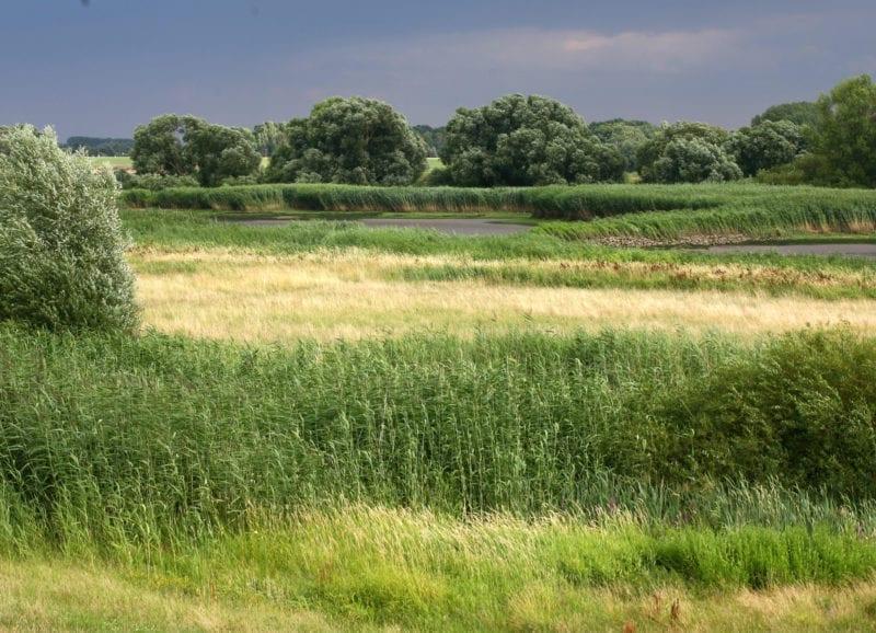Hof Eggers - Blick übers Elbvorland