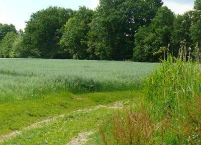 Natur-Rundwanderweg auf Hof Eggers, Station 3