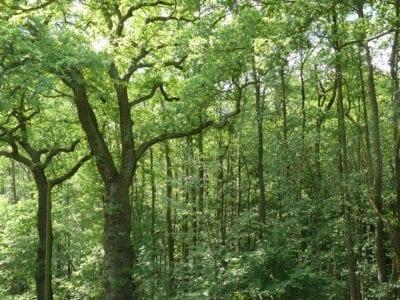 Natur-Rundwanderweg auf Hof Eggers, Station 12