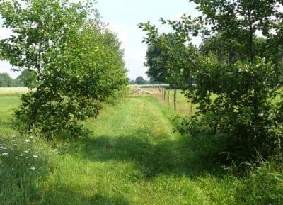 Natur-Rundwanderweg auf Hof Eggers, Station 14
